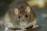 Pest-Control services,  Bugs & rodents eliminated
